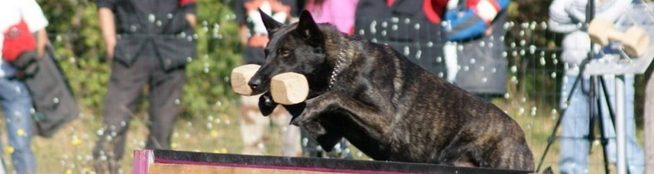 dressage chien vizille